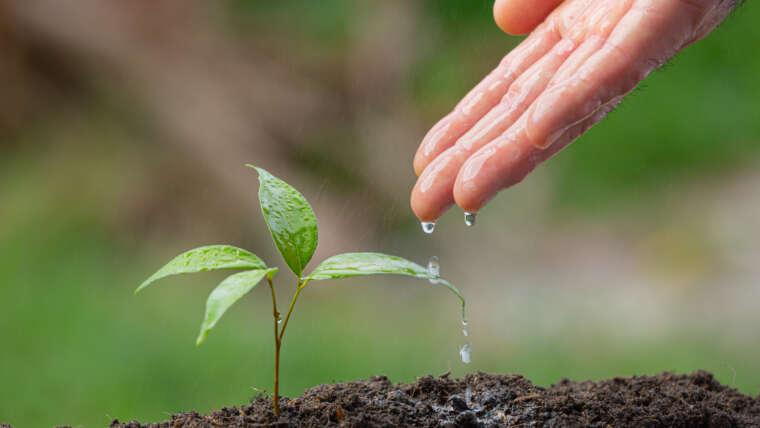 Docencia: función nutricia de la Madre Tierra