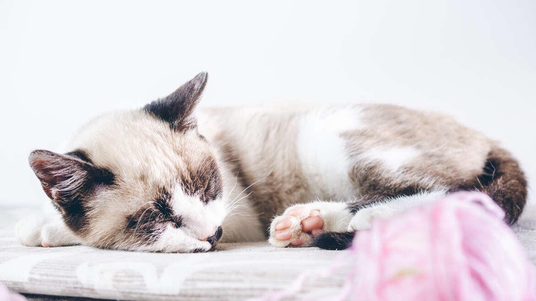 Las 3 claves de un buen descanso según el Yoga